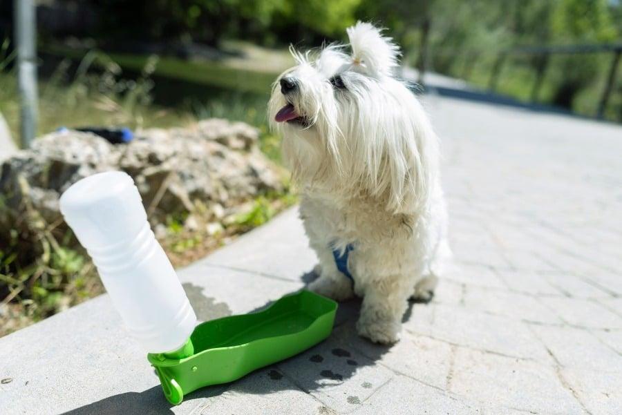 Dog Water Bottle Tips