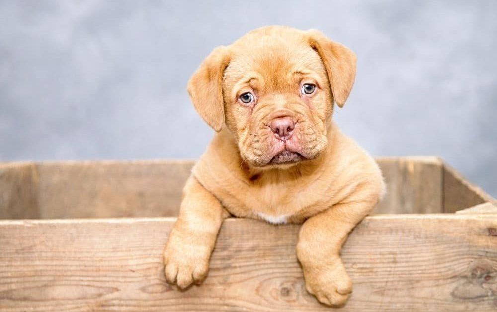 Kijiji Adds Accountability for Pet Ads