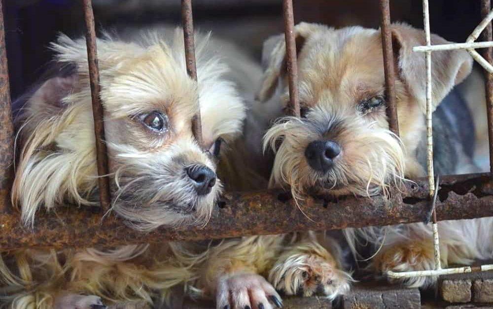 Progress Report on Banning Kijiji Puppy Mill Sales