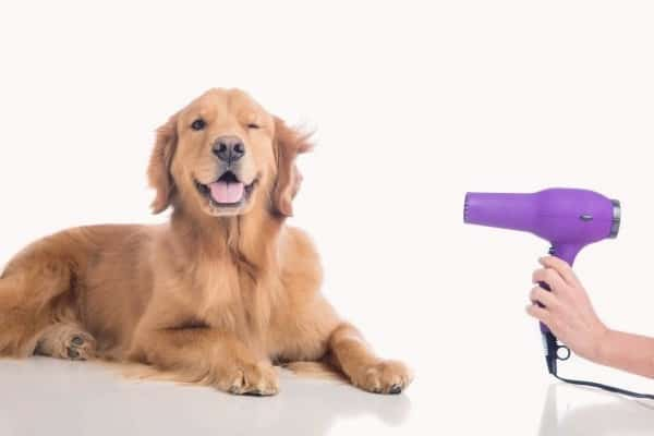 Enjoyable grooming