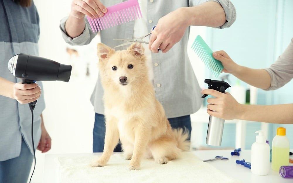Pet Grooming in Canada