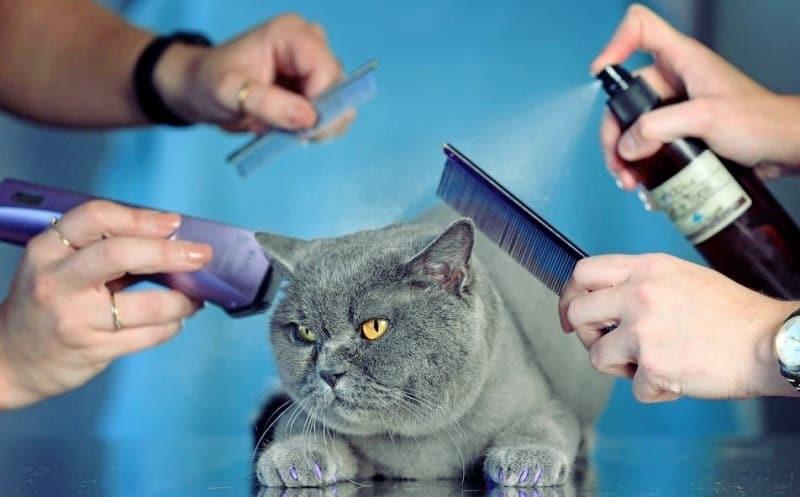 What is pet grooming?